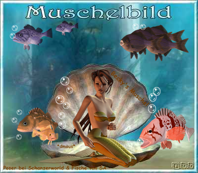 Muschelbild